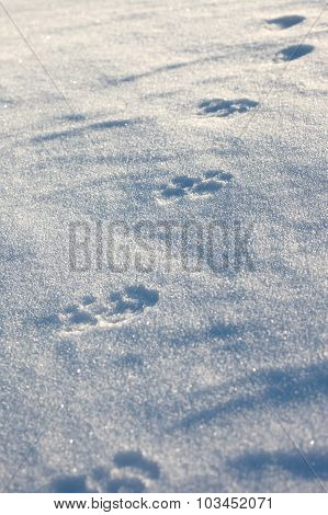 The wolf prints in the snow plain
