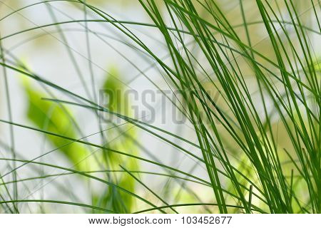 Grass At Waterside Of The Pond