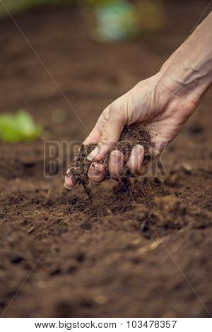 Closeup Of Female Hand  Holding A Handful Of Rich Fertile Soil That Has Been Newly Dug Over Or Tille