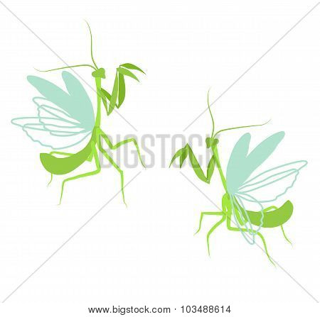 Praying Mantis. Flat Drawing Illustration Of Insect On White Background