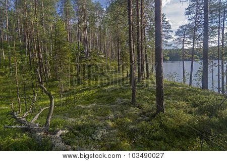 Shore Of A Forest Lake.