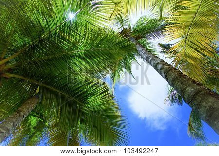 Palm Sun Top