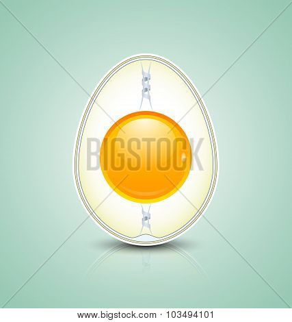 Egg Cross Section Icon