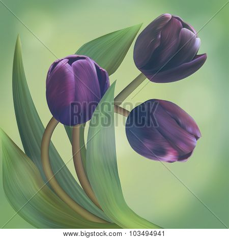Composition With Black Tulips In Beautiful Green Frame. Unique Banner For Congratulation, Conceptual