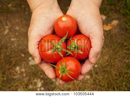 woman holding a red tomatoes