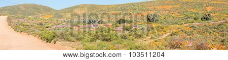 Panorama Of Wild Flowers At Stofkraal
