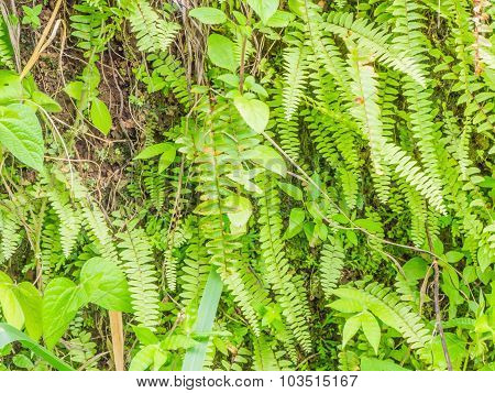 Vertical Fern Tree And Tropical Green Plant