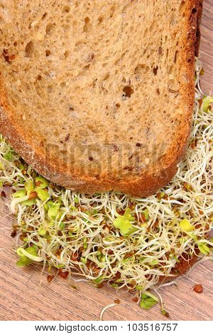 Wholemeal Bread With Alfalfa And Radish Sprouts