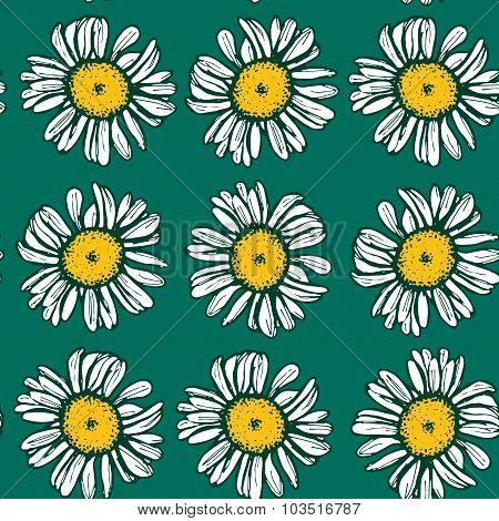 Beautiful vintage background with white daisies seamless patern on green background. Vector