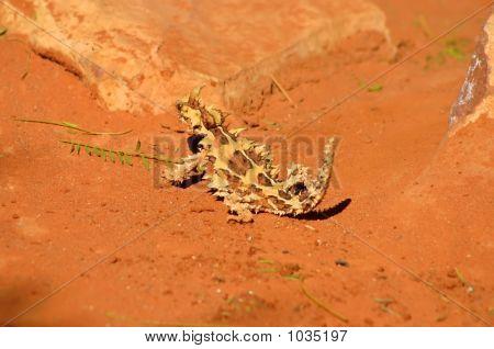 Australia Outback 97
