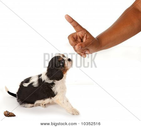 Reprimenda de perro