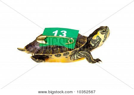 Lucky Number 13 Turtle