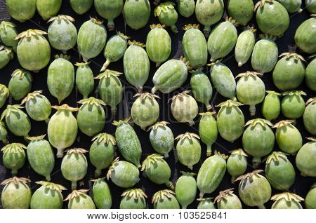 Close Up Of Opium Poppy Heads