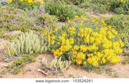 Wild Flowers At Groenriviermond