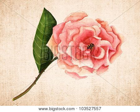 A vintage-styled watercolour drawing of a pink rose on textured brown paper, toned