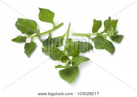 Fresh New Zealand spinach leaves on white background