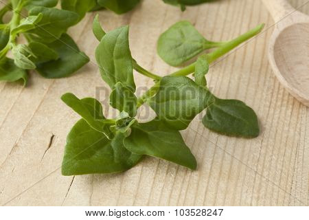 Fresh raw New Zealand spinach leaves close up