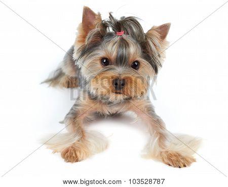 Dog With Large Eyes