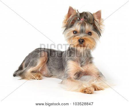 Nice Dog With Short Hair