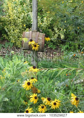 Daisies and barrel