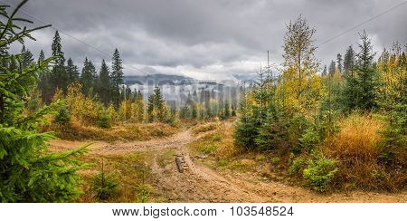 Rainy Landscape With Forest