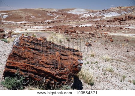 Large Section Of Petrified Wood At Petrified Forest National Park, Arizona.