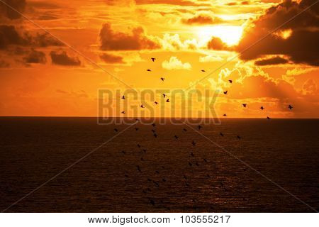 Flocks Of Starlings Flying Into A Bright Orange Sunset