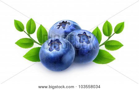 Three Blueberries With Branches And Leaves