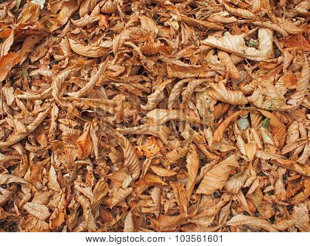 Surface Of The Ground In The Park, Covered With Fallen Leaves
