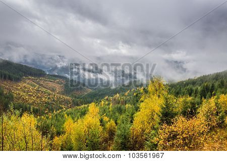 Landscape With Forest And Clouds