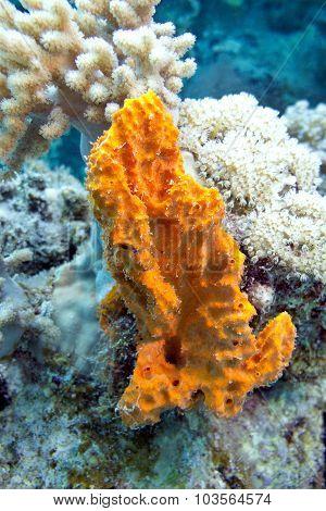 Coral Reef With Sea Sponge In Tropical Sea- Underwater
