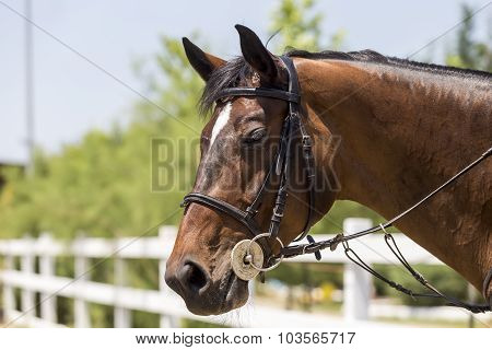 Close up of the horse with nature background