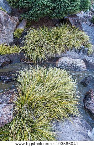 Sedge Grass And Stream