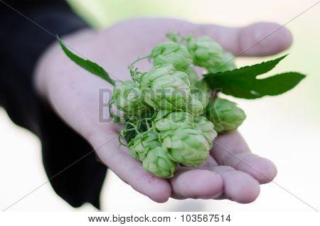 Hops In Hand