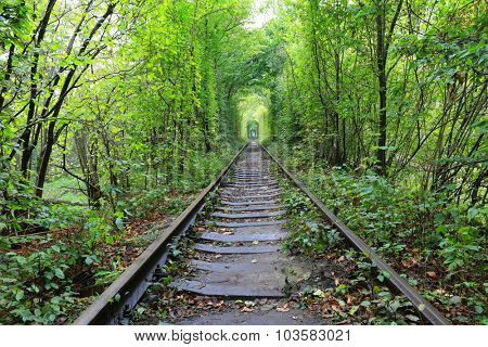 railway road in autumn forest