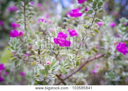 Pink purple flowers