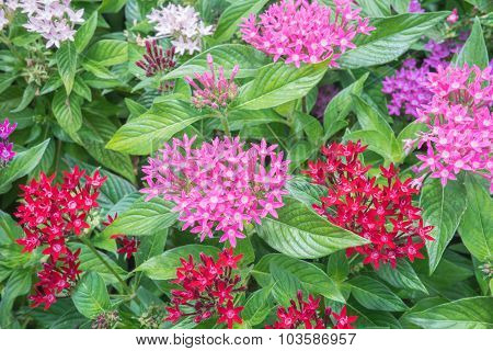 Pink, red and white flowers
