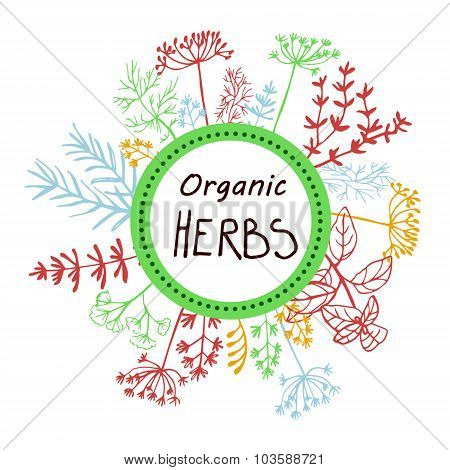 Vector background hand drawn herbs and spices.