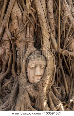 Tree Buddha In Ayutthaya