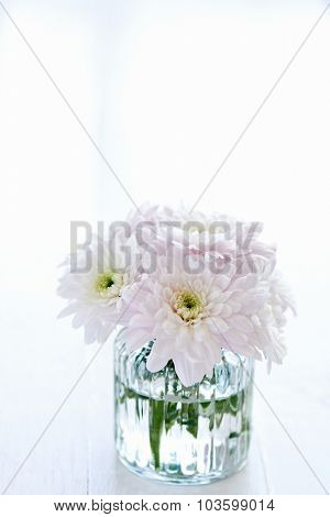 Close up of a small arrangement of light pink chrysanthemums in a clear vase with copyspace