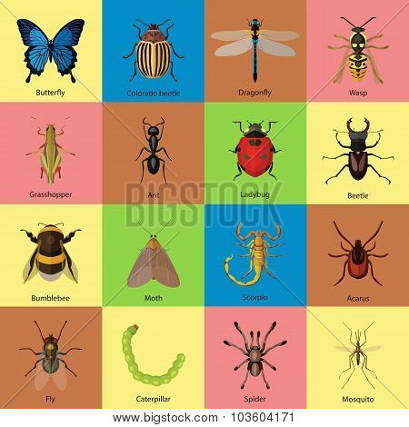 Set of insects flat style design icons. Butterfly, Colorado beetle, Dragonfly, Wasp, Grasshopper, An
