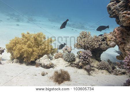 Coral Reef In Tropical Sea, Underwater