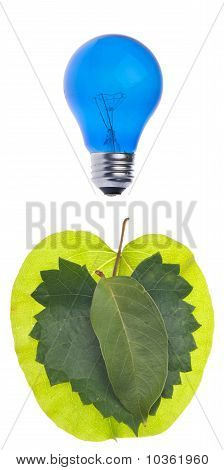 Ideas About Going Green