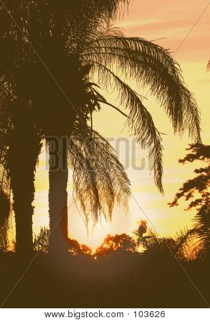 Sun Set With Palm Trees