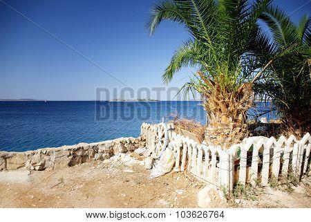 Palm Tree And View Of The Warm And Clean Sea, Croatia Dalmatia