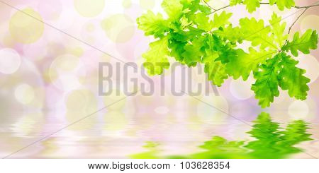 Green Background With Oak
