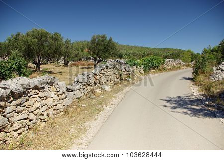 Asphalt Road Along The Olive Grove, Croatia Dalmatia