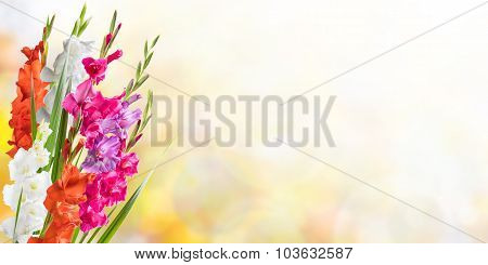 Beautiful Floral Nature Background