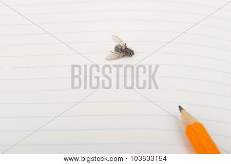 Copybook with fly and pencil