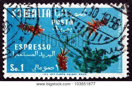 Postage Stamp Italy 1955 Erythrina Melanacantha, Plant